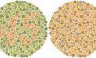 Comment déceler le daltonisme ?