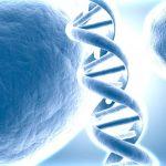 L'ADN capable de reproduire un portrait-robot en 3D