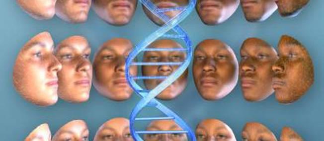 Reproduction visage humain grâce à l'ADN